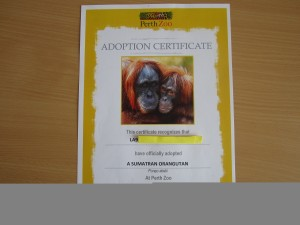 LA9 Sumatran Orangutan adoption cert